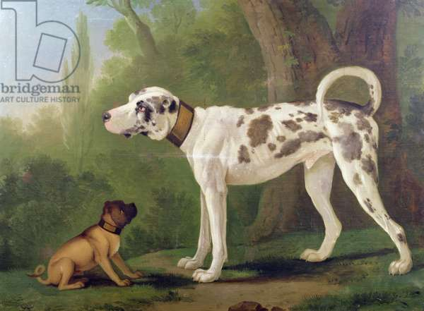 Hound and Terrier (oil on canvas)
