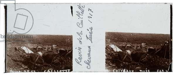Dead horses, Ravin de la Caillette, 1917 (b/w photo)