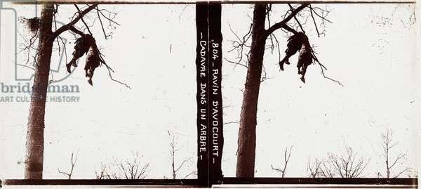Corpse in a tree, Ravin d'Avocourt (b/w photo)