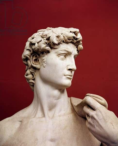 David, 1501-04 (marble) (detail of 4344)