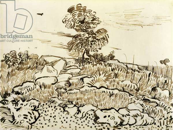 Rocky Ground at Montmajour, 1888-89 (pen, reed pen & ink on paper)