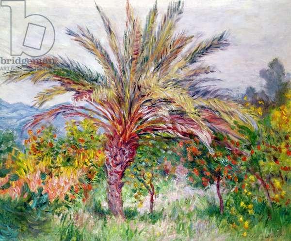 Palm Tree at Bordighera, c.1884 (oil on canvas)