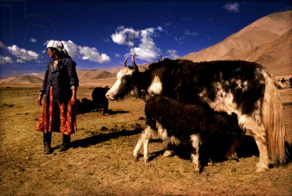 Yak Herders outside Kashgar, China (photo)