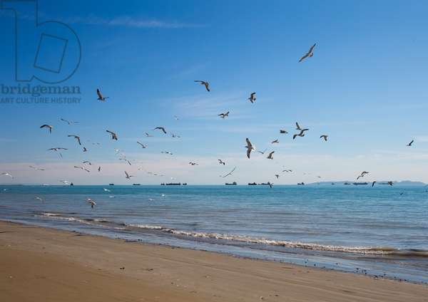 Seagulls On The Seaside, Hormozgan, Bandar Abbas, Iran, 2015 (photo)
