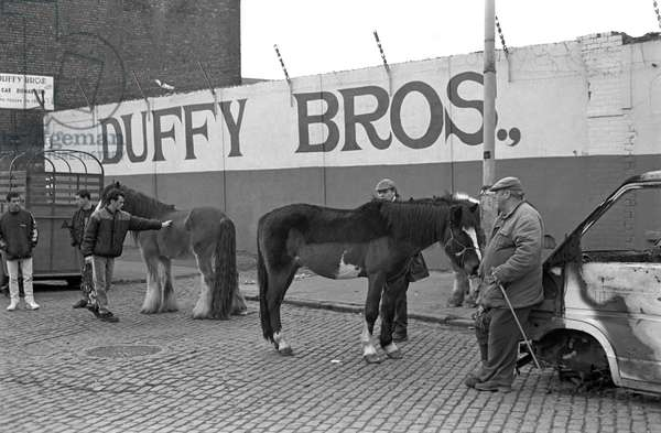 Horses for sale in Smithfield horse market, Dublin, Ireland, 90s