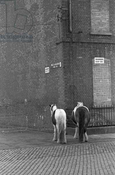 Horses in Smithfield Horse market, Dublin, Ireland, 90s