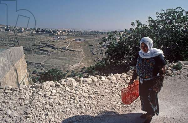 Palestinian wman with plastic shopping basket, West Bank, East Jerusalem, Palestine, Israel, Palestinia Authority (photo)