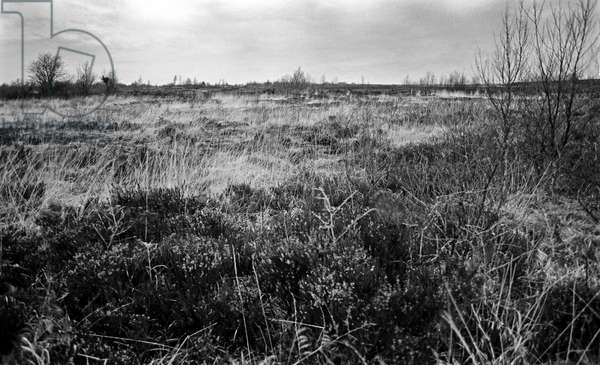 Bog of Allen, a large raised bog in the centre of Ireland between the rivers Liffey and Shannon, referred to in James Joyce ''The Dead'  in 'Dubliners', Ireland (photo)