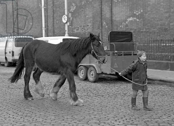 Boy leading horse for sale in Smithfield horse market, Dublin, Ireland, 90s