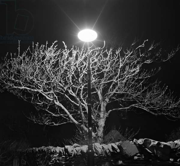 Lamp and tree at night, Co Down, Northern Ireland (b/w photo)