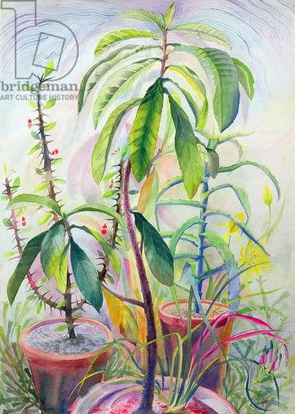 Avocado plant, 1965 (gouache)