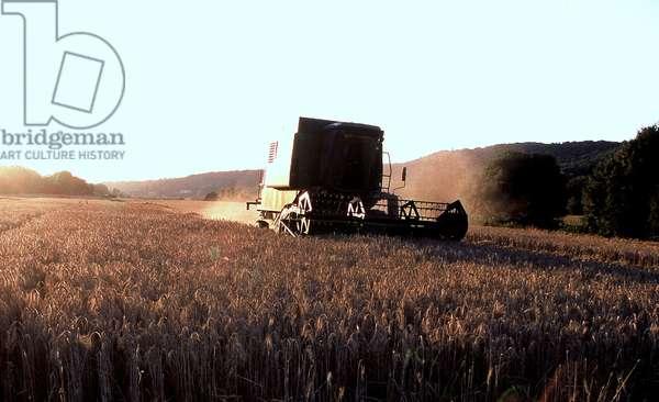Harvest, Bièvres, France, 2000 (photo)