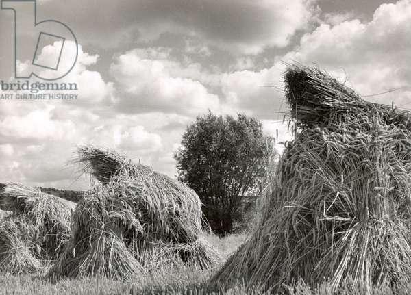 Harvest, Switzerland, 1945 (b/w photo)