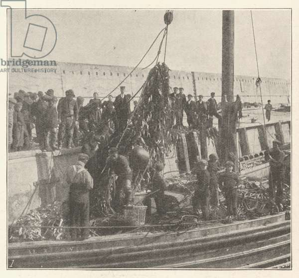 Nets of the Scottish Herring Fleet, damaged by the Recent Gale (engraving)