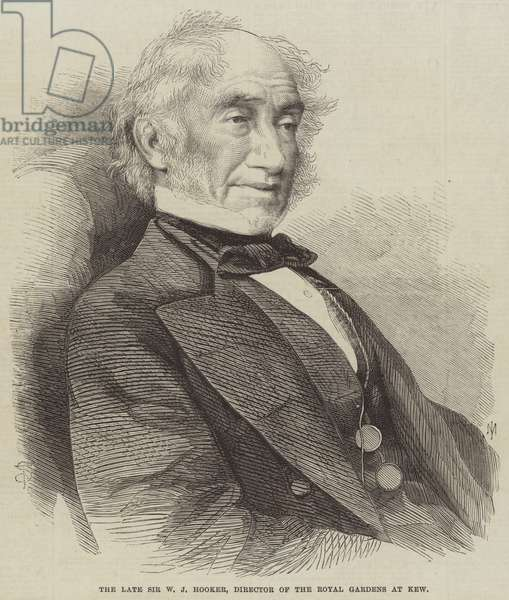 The late Sir W J Hooker, Director of the Royal Gardens at Kew (engraving)