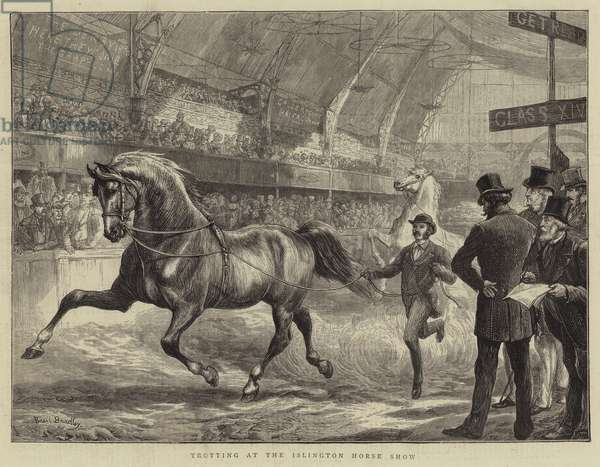 Trotting at the Islington Horse Show (engraving)