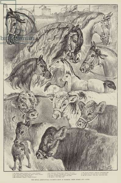 The Royal Agricultural Society's Show at Windsor, Prize Horses and Cattle (litho)