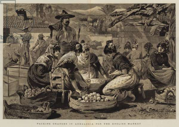 Packing Oranges in Andalusia for the English Market (engraving)