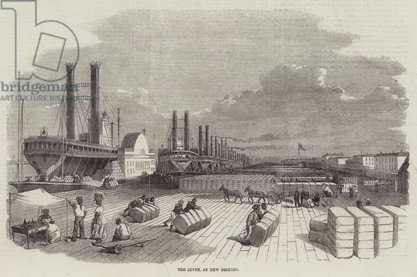 The Levee, at New Orleans (engraving)
