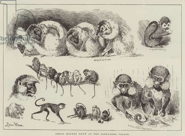 Great Monkey Show at the Alexandra Palace (engraving)