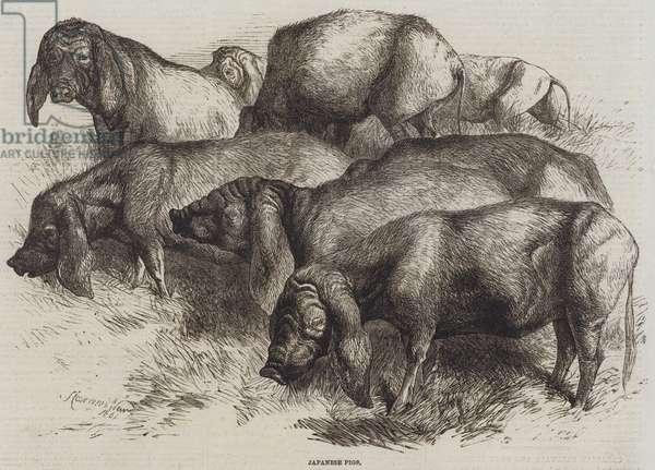 Japanese Pigs (engraving)