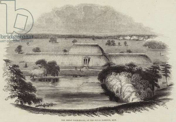The Great Palm-House, at the Royal Gardens, Kew (engraving)