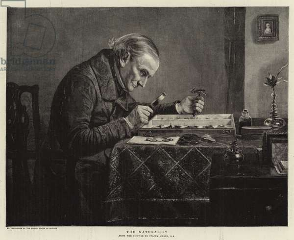 The Naturalist (engraving)