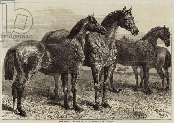 Prize Horses at the Horse Show in the Agricultural Hall, Islington (engraving)