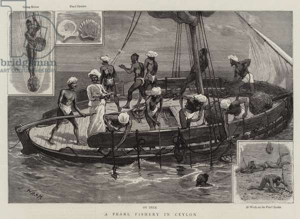 A Pearl Fishery in Ceylon (engraving)