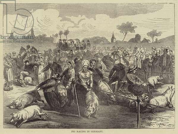 Pig Racing in Germany (engraving)