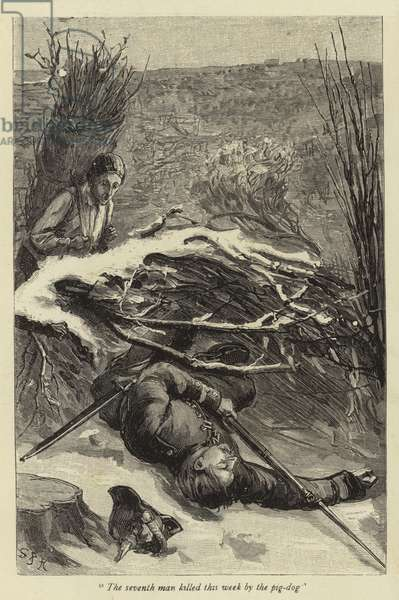 The seventh man killed this week by the pig-dog (engraving)