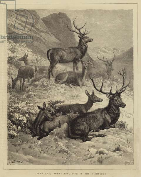 Deer on a Sunny Hill Side in the Highlands (engraving)