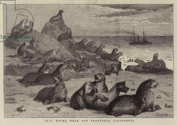 Seal Rocks, near San Francisco, California (engraving)