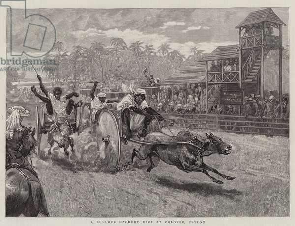 A Bullock Hackery Race at Colombo, Ceylon (engraving)