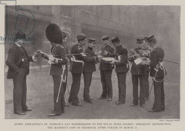 Queen Alexandra's St Patrick's Day Remembrance to the Royal Irish Guards, Sergeants distributing Her Majesty's Gift of Shamrock after Parade on 17 March (b/w photo)