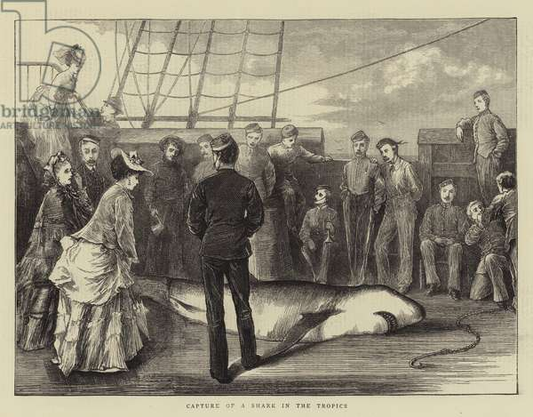 Capture of a Shark in the Tropics (engraving)