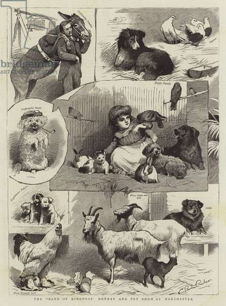 """The """"Band of Kindness"""" Donkey and Pet Show at Manchester (engraving)"""
