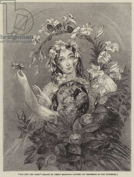 The Lily and Rose (engraving)