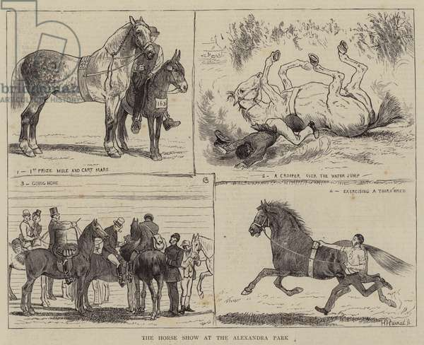 The Horse Show at the Alexandra Park (engraving)