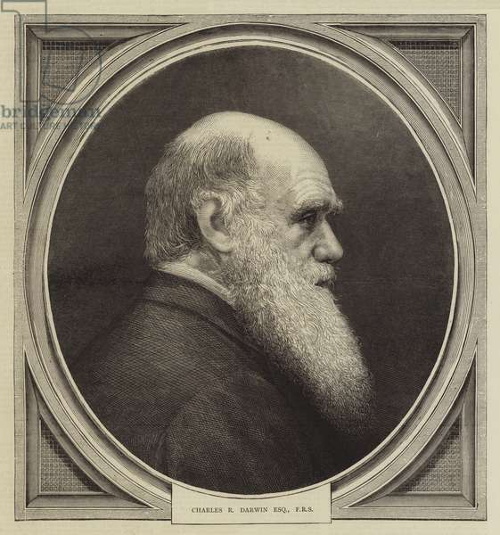 Charles R Darwin, Esquire, FRS (engraving)
