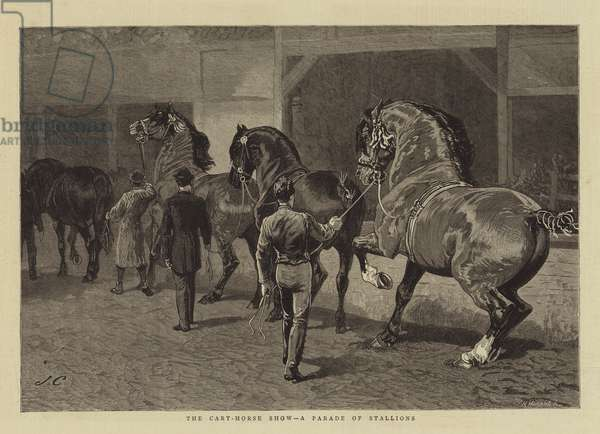 The Cart-Horse Show, a Parade of Stallions (engraving)