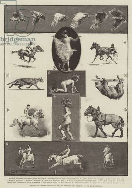 Motions of Animals illustrated by the Instantaneous Photographs of Mr Muybridge (engraving)