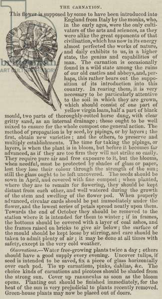 The Carnation (engraving)