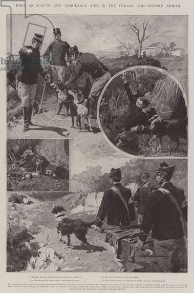 Dogs as Scouts and Ambulance Aids in the Italian and German Armies (litho)