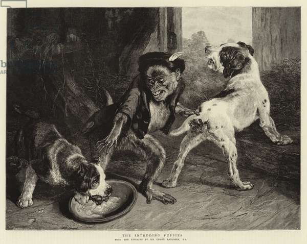The Intruding Puppies (engraving)