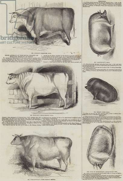 Prize Animals at the Royal Society of England Meeting at Derby (engraving)