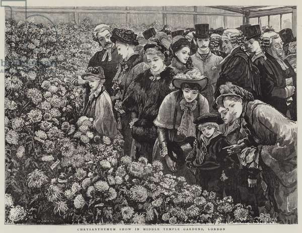 Chrysanthemum Show in Middle Temple Gardens, London (engraving)