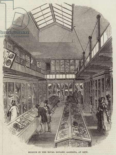 Museum in the Royal Botanic Gardens, at Kew (engraving)