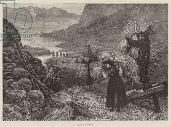Harvest in Norway (engraving)