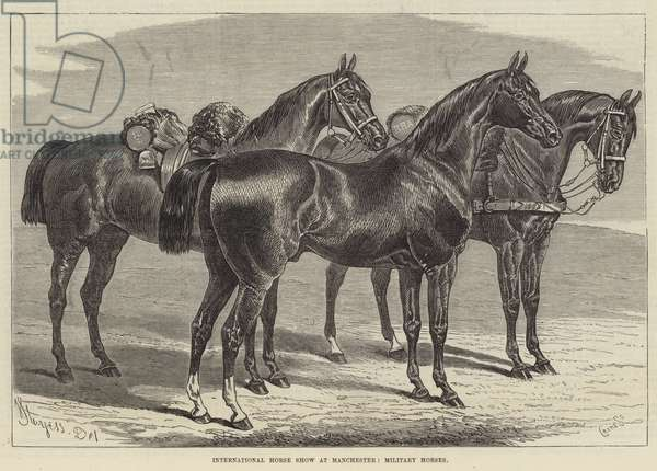 International Horse Show at Manchester, Military Horses (engraving)
